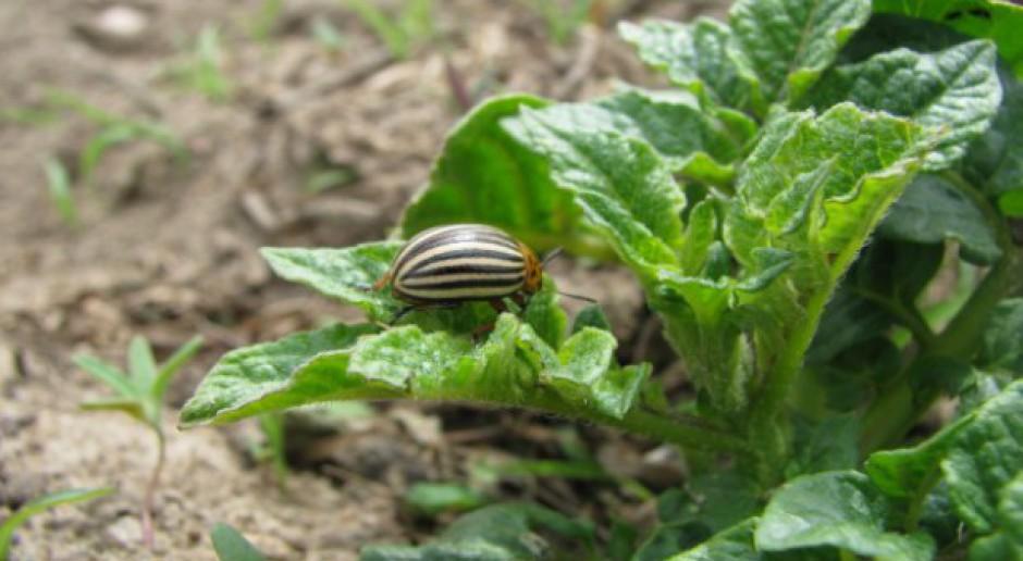 Preparaty do zwalczania stonki ziemniaczanej
