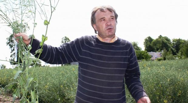 Kontrowersyjny azot podany w fazie zielonej łuszczyny