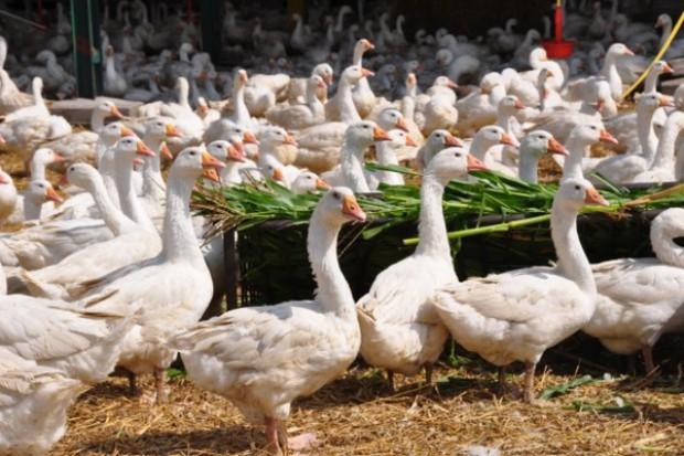 Węgrzy inwestują w produkcję zwierzęcą w Rosji