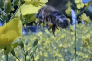 Ponad 200 ha siedlisk dla pszczół