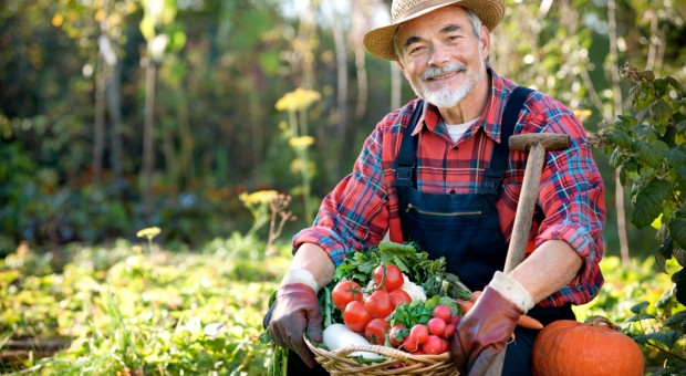 KRUS: 30 czerwca upływa termin złożenia wniosku o  ubezpieczenie społeczne rolników
