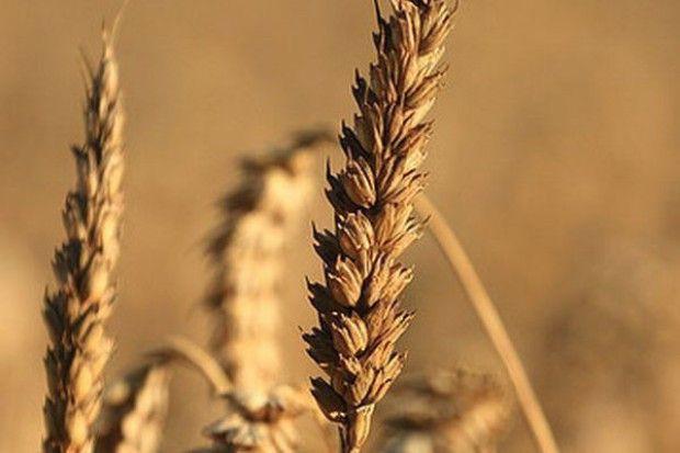 PZPRZ: Trudna sytuacja na rynku zbóż