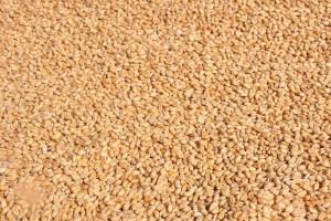 Spowolnienie polskiego eksportu zbóż przez porty