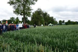 PROCAM: propozycje odmianowe pszenicy ozimej