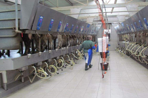 Rolnicy będą mogli zapłacić kary za przekroczenie kwot mlecznych w ratach