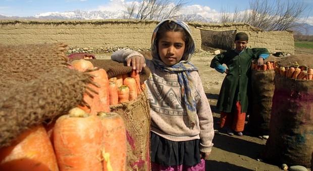 FAO opracowała podręcznik monitorowania pracy dzieci w rolnictwie