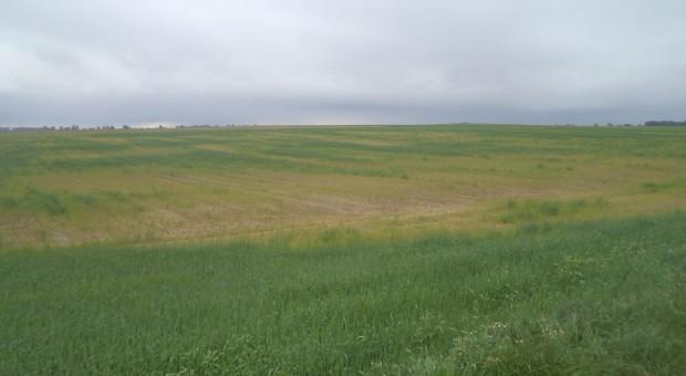 Projekt ustawy o ochronie gruntów skierowany do II czytania