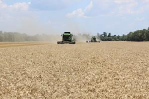 Drugi tydzień korekty cen zbóż