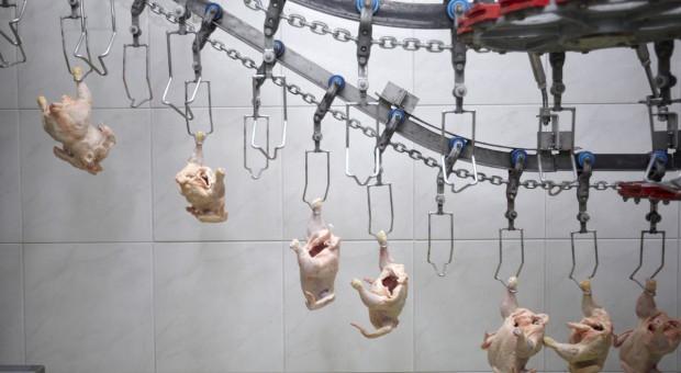 Skarga Chin do WTO ws. unijnych kontyngentów na drób