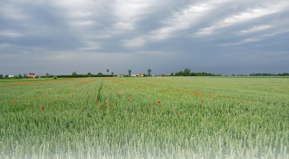 Dziesięć błędów w uprawie zbóż ozimych