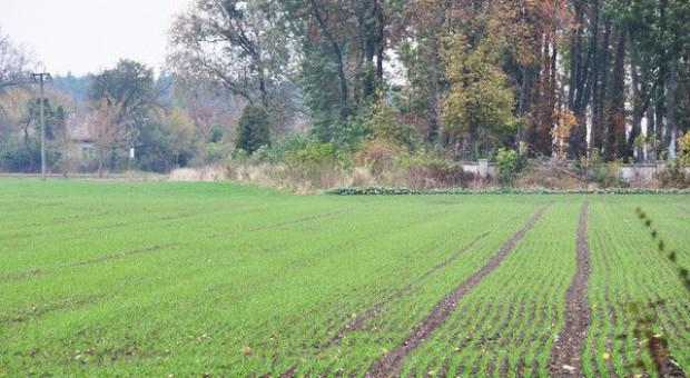 Senat za ustawą o ochronie gruntów rolnych