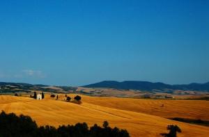 IGC prognozuje światowe zbiory zbóż na poziomie 1,97 mld ton