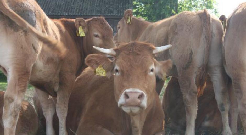 """""""Puls Biznesu"""": Wołowina rozkwita w statystykach"""