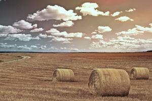 Rosja:  Przez suszę utracono 1,7 mln hektarów upraw