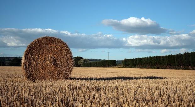 Żniwa mają się ku końcowi – jakość ziarna zróżnicowana