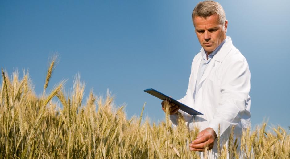 Świadectwa jakości handlowej zbóż