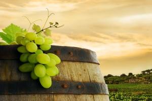 Kolejny rok winiarski rozpoczęty