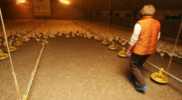 Rosja: Prognoza wzrostu produkcji  kurcząt brojlerów do 2016 r.