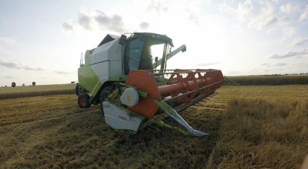 Limagrain: Wyniki plonowania zbóż i grochu