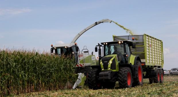 Kiedy zbierać kukurydzę na kiszonkę?