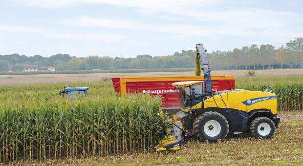 Ile kosztuje zbiór kukurydzy?