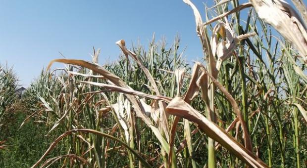 PFHBiPM apeluje o pomoc dla rolników