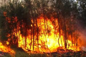 MSW: Rekordowa liczba pożarów w lipcu i sierpniu