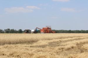 Przecena towarów rolnych na światowych giełdach