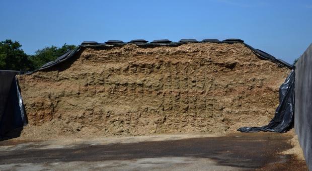 Zakiszanie kukurydzy – z dodatkami czy bez?