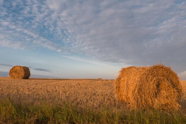Izba Zbożowo-Paszowa: Zbiory zbóż lepsze od wcześniejszych prognoz