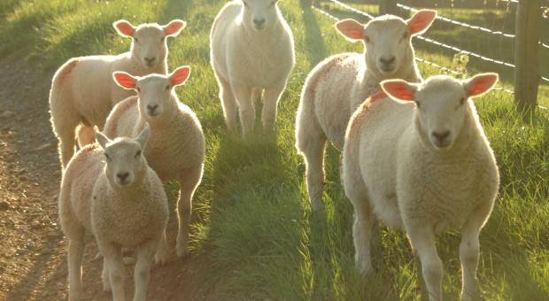 PE chce zakazu klonowania zwierząt w UE
