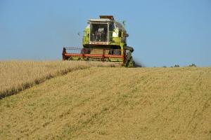 Wysokie zbiory zbóż na Ukrainie