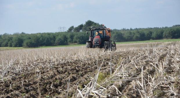 Siew zbóż w uprawie pasowej