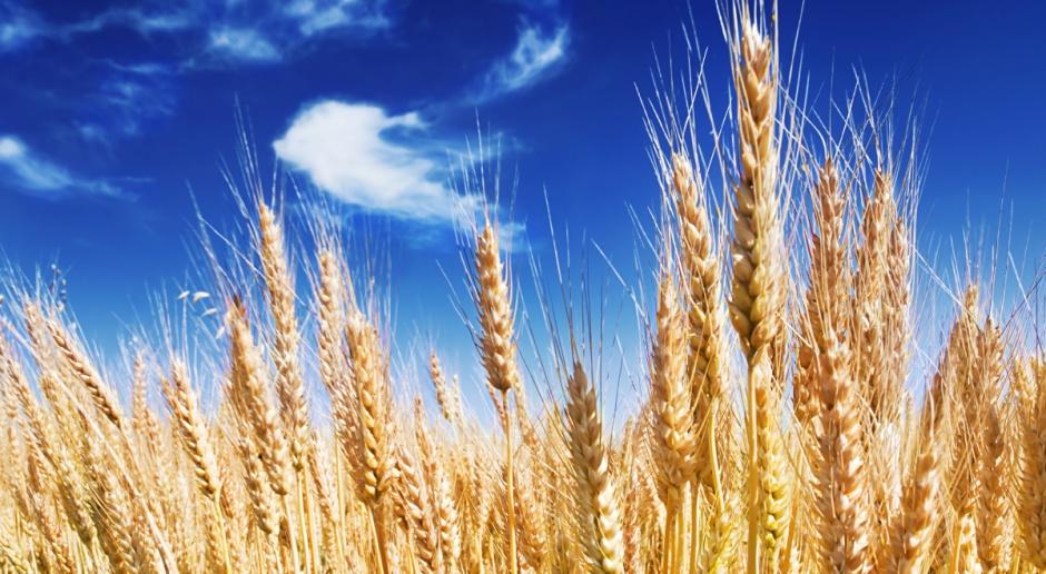 Copa-Cogeca: Mniej zbóż i oleistych, wiecęj roślin białkowych