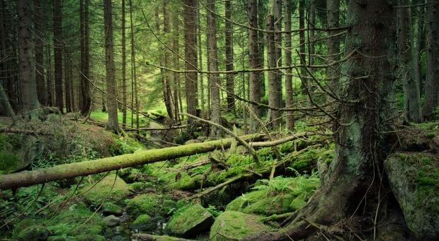 PSL: podejrzewamy, że PiS chce sprywatyzować lasy
