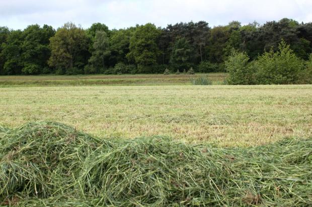 Marszałkowie będą zajmować się opłatami za wyłączenie gruntów z produkcji rolnej