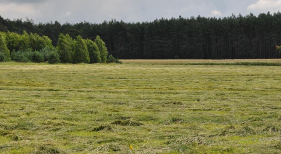 Sejm za większą ochroną lasów przed sprzedażą