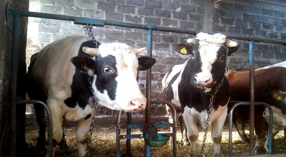 Czeka nas upadek tysięcy gospodarstw rolnych - alarmują rolnicy
