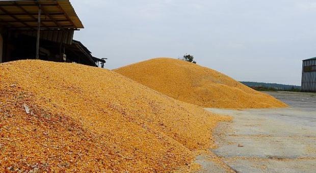 Polska podtrzymuje status kraju wolnego od GMO