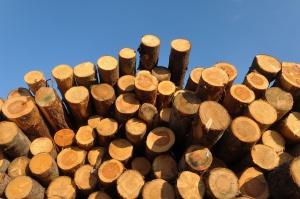 Kleina: Nie wykluczam poparcia wniosku o odrzucenie ustawy o lasach