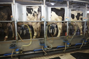 Hiszpania: Rząd przyjął pakiet pomocowy dla producentów mleka