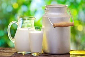 Koszt produkcji mleka w Danii to ponad 1,8 zł/kg