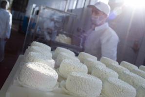 ARR: mleczarnie zapłaciły karę za przekroczenie kwot mlecznych
