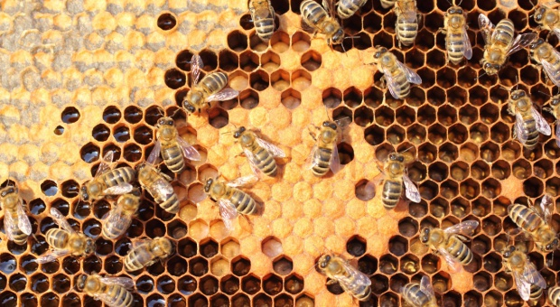 Copa-Cogeca nagrodziły współpracę rolników i pszczelarzy