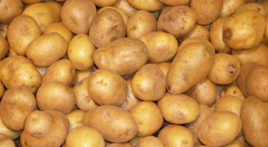 Zbiory ziemniaka znacznie niższe, a ceny wcale nie rekordowe