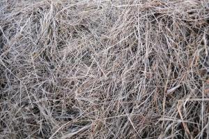 ARMiR zakończyła weryfikację wniosków o pomoc suszową, zapowiada wypłaty