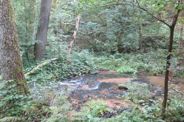 Obszary Natura 2000 bez możliwości zalesiania z PROW