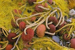 Jest porozumienie państw UE ws. połowów na Bałtyku. Ekolodzy protestują