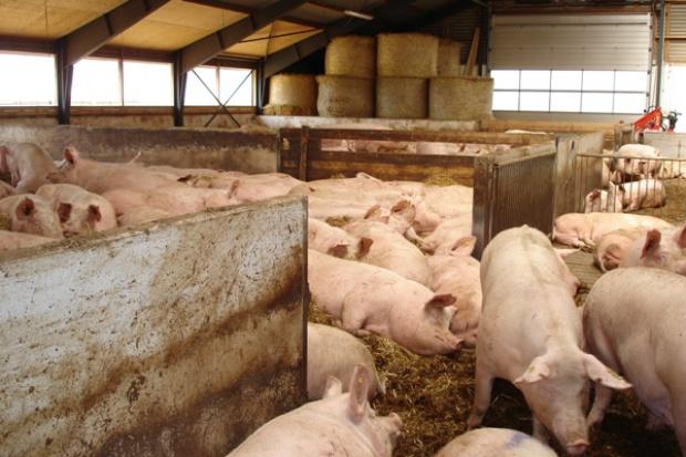 Ziarno owsa doskonałym źródłem włókna dla zwierząt rozpłodowych