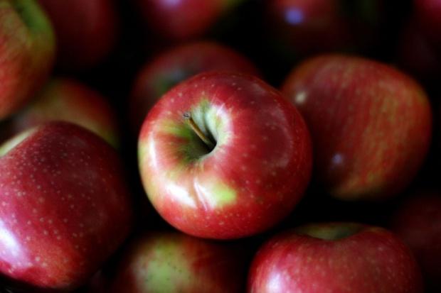 Od 2 listopada ARR zbiera wnioski dot. przekazania owoców na cele charytatywne